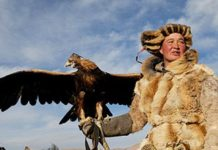 Một phút nóng giận, ân hận suốt đời: Câu chuyện xúc động về con chim ưng quý của Thành Cát Tư Hãn